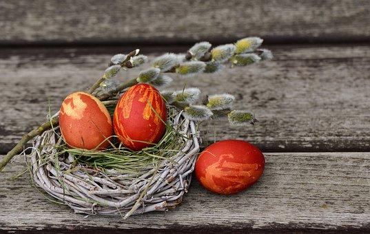 brown eggs in a plain nest