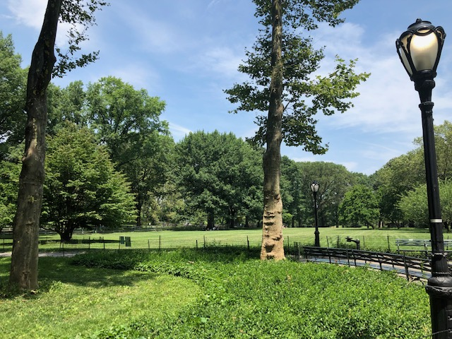 Vast lawn in Central Park
